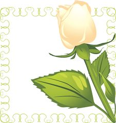 Free White Rose In The Decorative Frame Stock Photo - 21995140