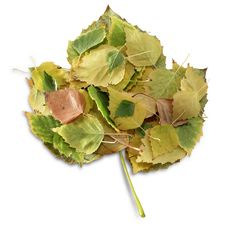 Free Leaves In A Leaf Royalty Free Stock Photography - 21997237