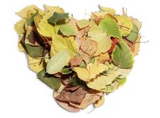 Free Heart Shaped Leaves Stock Photos - 21997253