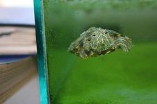 Free Turtle In Aquarium Stock Image - 220011
