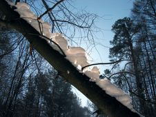 Free Tree Stock Photography - 220092