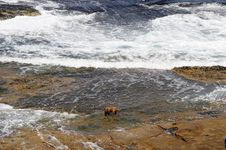 Free Dog On The Rocks Royalty Free Stock Photo - 221415