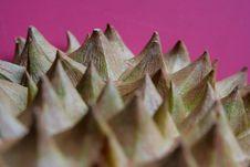 Free Thorns Stock Photos - 221823