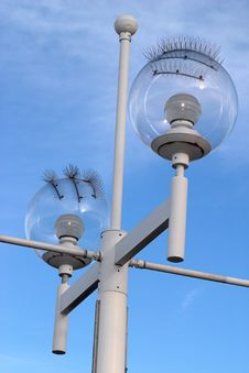 Free Seagull-proof Street Lamp Royalty Free Stock Photo - 223235