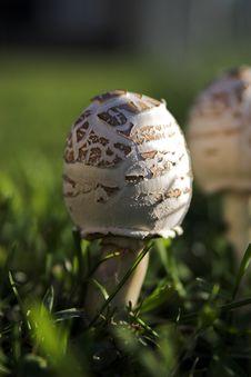 Free Mushroom Forming Stock Photography - 223592