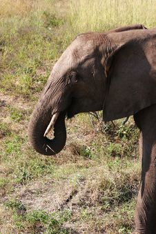 Free Elephant Stock Photo - 224920