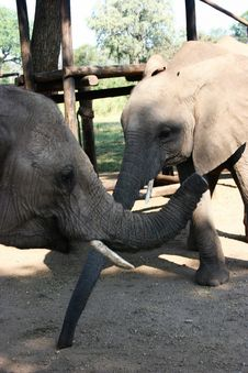 Free Elephant Stock Photos - 224923