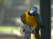 Free Blue Macaw Royalty Free Stock Photo - 227205