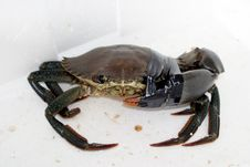 Free Hurt Crab Royalty Free Stock Image - 228486