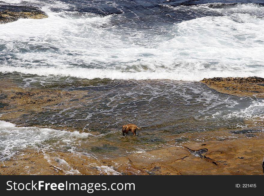 Dog on the Rocks