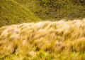 Free Hay Field 2 Stock Image - 2203381