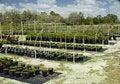 Free Nursery Outdoors Royalty Free Stock Photo - 2204955