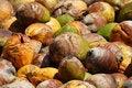 Free Coconuts Stock Photos - 2208693