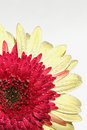 Free Yellow Flower Stock Photo - 2209260