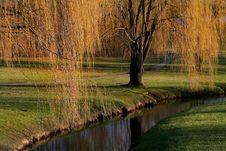 Free Willow Tree Stock Photos - 2200453