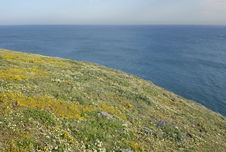 Free Wildflowers And Ocean Royalty Free Stock Photography - 2201927