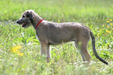 Free Dog On The Meadow Royalty Free Stock Photos - 2202688