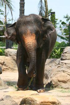 Free Elephant Walking Stock Image - 2203011
