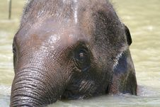 Free Young Elephant Look Royalty Free Stock Photography - 2203317
