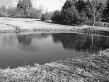 Free Pond Stock Photography - 2205882