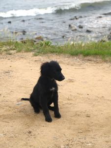 Free Black Dog On The Coast Royalty Free Stock Photos - 2206038