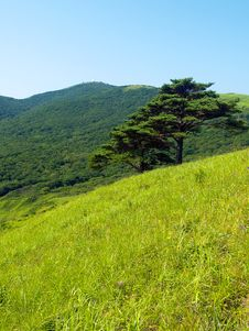 Free Single Pine Tree On The Hill Royalty Free Stock Photography - 2206077