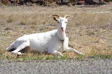 Free Goat Stock Image - 2206901