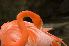 Free Flamingo Grooming Stock Photography - 2209752