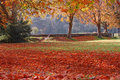 Free Autumn Leaves Royalty Free Stock Images - 22005179