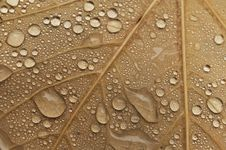 Free Water Drops Of Autumn Leaves Royalty Free Stock Photography - 22002627