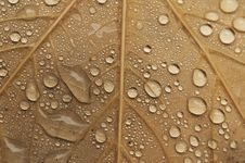 Free Water Drops Of Autumn Leaves Royalty Free Stock Photo - 22002635