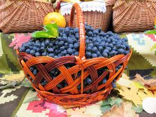 Free Grapes In The Basket Stock Photos - 22008543