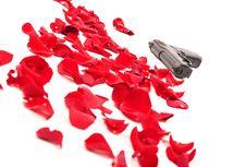 Free Gun Between The Rose Petals Stock Image - 22009501