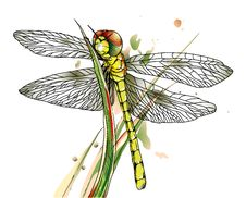 Free Dragonfly On Grass Royalty Free Stock Photos - 22009968