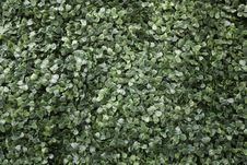 Free Small, Green Bunched Leaves Texture Royalty Free Stock Photos - 22010048