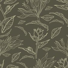 Vector Seamless Floral Vintage Pattern Royalty Free Stock Image