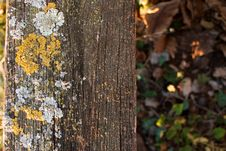 Free Moss And Lichen Stock Images - 22013154