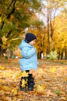 Little Boy In Autumn Park Royalty Free Stock Photos