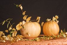 Free Jack O Lantern Royalty Free Stock Photo - 22018555