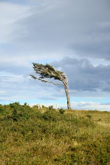 Free Tree Against The Wind Stock Photo - 22023100