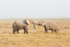 Free Two Elephants Stand Face To Face Stock Photos - 22025913