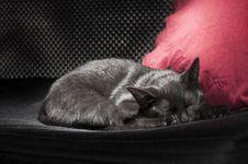 Free Black Cat Sleeping Stock Photo - 22026780