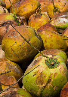 Free Coconut Royalty Free Stock Photo - 22030205