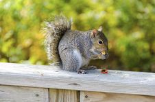 Free Squirrel With A Snack Stock Photography - 22030372