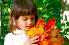 Free Autumn Maple Leaves.jpg Royalty Free Stock Photo - 22038545