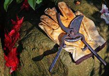 Garden Scissors Stock Photo