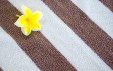 Free Beach Towel Royalty Free Stock Photography - 22040767