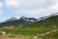 Free Vineyards In The Mountains Stock Photography - 22041492