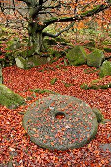 Free Woodland Autumn Millstone Stock Photography - 22041502