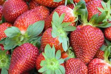 Free Strawberries Closeup Royalty Free Stock Images - 22041679